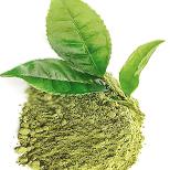 Extrakt ze zeleného čaje