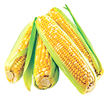 Aminokyseliny kukuřice